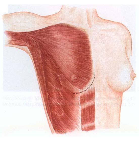задержка и увеличение груди